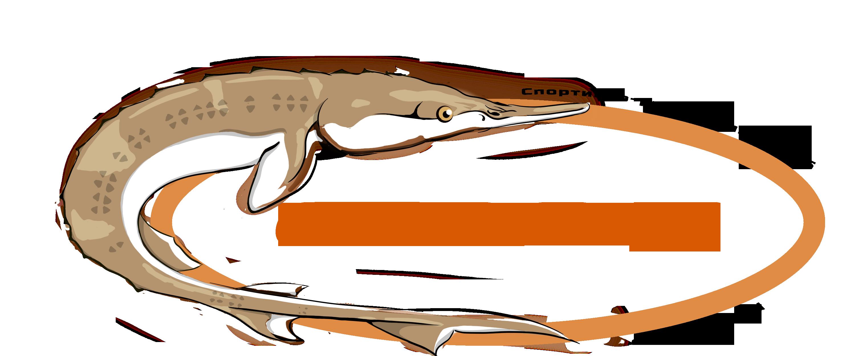рк севрюга платная рыбалка